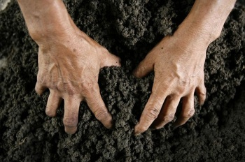 Почти даром: заброшенные земли уйдут к аграриям по льготной цене