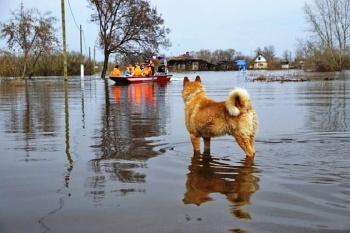 Паводок в Казани: около тысячи домов будут под угрозой затопления