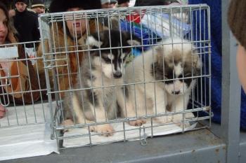 В Казани сносят птичий рынок