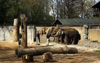 Кто и когда достроит казанский зоопарк?