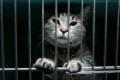 Живой конфискат. Пять историй изъятых за коммунальные долги котов
