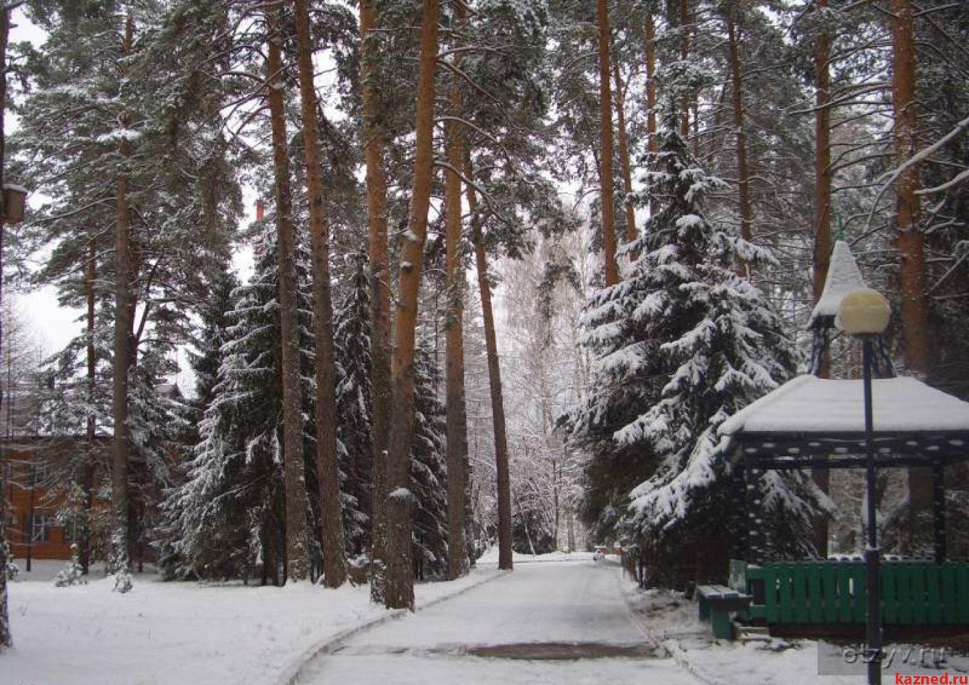 Земельный участок в поселке Васильево (20 км от Казани) в хвойном лесу (миниатюра №1)